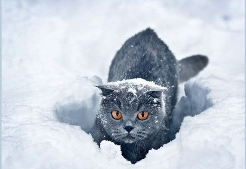 怎样拍摄出漂亮的雪景?