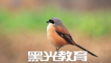 拍摄鸟类的技巧
