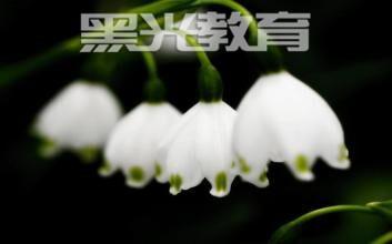 怎么拍摄完美花朵静物