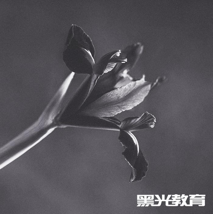 让入门者可以由浅到深的学习摄影技巧和基础知识.-北京摄影培训机图片
