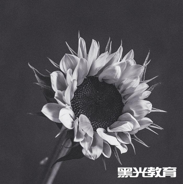 北京儿童摄影学习班
